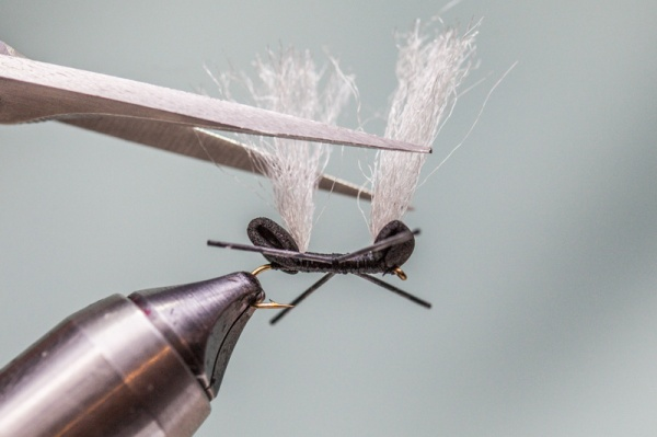 trim poly wing on chubby ant