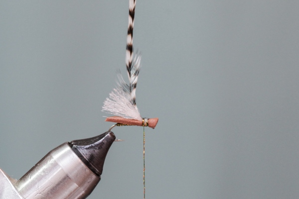 Attach hackle on fly